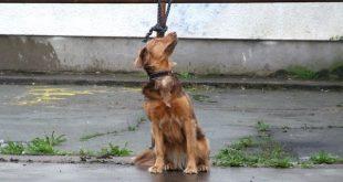 Rosignano: corso per accudire gli animali abbandonati lezioni
