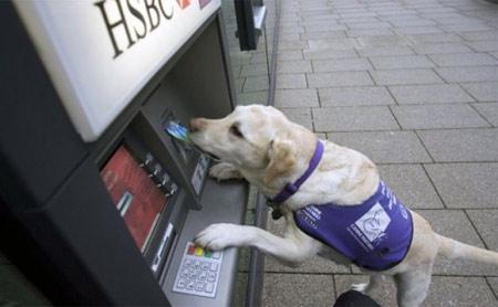 cane-bancomat