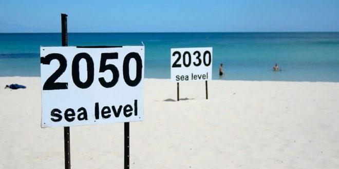 La temperatura dei mari si alza, le specie anfibie diventano terrestri