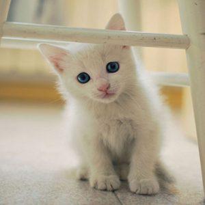 gatto-e-lettiera31